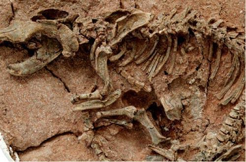 Ученые обнаружили предков жирафов и носорогов